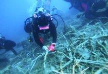 Peek Holidays-Coral Planting in Seribu